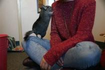 comfort-animals-megumi